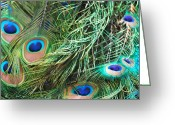 Everything Else Greeting Cards - Peacock Feathers Greeting Card by Kimberly Gonzales