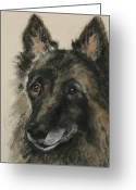 Sheepdog Mixed Media Greeting Cards - Peaked Interest Greeting Card by Cori Solomon