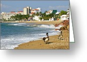 Pelican Photo Greeting Cards - Pelicans on beach in Mexico Greeting Card by Elena Elisseeva