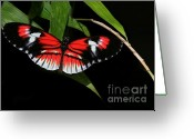 Gossamer Greeting Cards - Piano Key Butterfly Greeting Card by Sabrina L Ryan