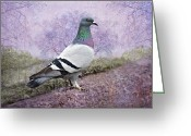 Green And White Greeting Cards - Pigeon in the Park Greeting Card by Bonnie Barry