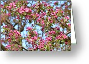 Crabapple Cards Greeting Cards - Pink Blossoms Greeting Card by Kathleen Struckle