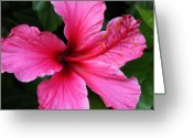 William And Magdalena Green Greeting Cards - Pink Flower Greeting Card by Magdalena Green