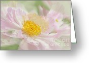 Pink Peonies Greeting Cards - Pink Peony Flower  Greeting Card by Jennie Marie Schell
