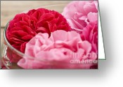 Red Roses Greeting Cards - Pink Roses Greeting Card by Frank Tschakert