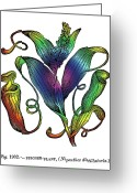 Oldfangled Greeting Cards - Pitcher Plant Greeting Card by Eric Edelman