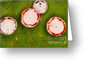 Antheraea Polyphemus Greeting Cards - Polyphemus Caterpillar Eggs Greeting Card by Ted Kinsman