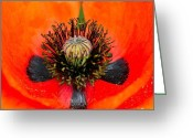 Whorl Greeting Cards - Poppy Heart Greeting Card by Karon Melillo DeVega