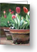 Tulips Pastels Greeting Cards - Potted Tulips Greeting Card by Cindy Plutnicki
