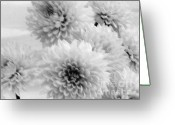 Pure Digital Art Greeting Cards - Pretty Petals Greeting Card by Marsha Heiken
