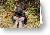 Alsatian Greeting Cards - Pretty Puppy Greeting Card by Sandy Keeton