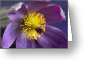 Beauty Mark Greeting Cards - Purple Flower Greeting Card by Mark J Seefeldt