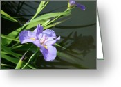 Violet Greeting Cards - Purple Iris Reflection Greeting Card by Ellen Henneke