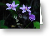 Bold Blossom Greeting Cards - Purple Orchids 2 Greeting Card by Michael Peychich