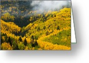 Santa Fe National Forest Greeting Cards - Quaking Aspen And Ponderosa Pine Trees Greeting Card by Ralph Lee Hopkins