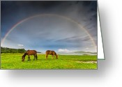 Bulgaria Greeting Cards - Rainbow Horses Greeting Card by Evgeni Dinev