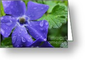 Trailing Greeting Cards - Raindrops on Sorcerers Violet Greeting Card by Thomas R Fletcher