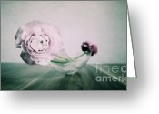Ranunculus Photo Greeting Cards - Ranunculus Greeting Card by Kristin Kreet