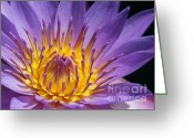 Florida Flowers Greeting Cards - Reaching for the Sun Greeting Card by Sabrina L Ryan