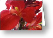 Canna Greeting Cards - Red Canna Lily Greeting Card by Sandi Floyd