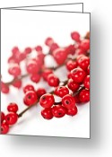 Vivid Greeting Cards - Red Christmas berries Greeting Card by Elena Elisseeva