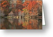 Oklahoma Landscape Greeting Cards - Red Cypress Trees Greeting Card by Iris Greenwell