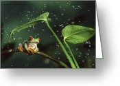 Red Eyed Leaf Frog Greeting Cards - Red Eyed Tree Frog in the Rain Greeting Card by Michael Durham