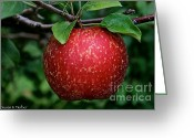 Ripened Fruit Greeting Cards - Red Gold Greeting Card by Susan Herber