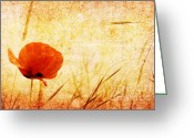 Sun Burst Mixed Media Greeting Cards - Red Poppy Greeting Card by Christophe ROLLAND
