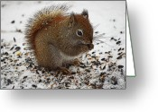 Diane Berry Digital Art Greeting Cards - Red Squirrel  Greeting Card by Diane E Berry