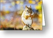 Peanuts Greeting Cards - Red squirrel Greeting Card by Elena Elisseeva