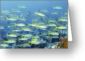 Marine Animals Greeting Cards - Reef Scene Greeting Card by Alexander Semenov