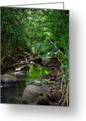 St. Lucia Photographs Greeting Cards - Reflections Greeting Card by Bill Mortley