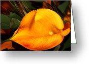 Photographer Greeting Cards Prints Greeting Cards - Rewolf Greeting Card by Jerry Cordeiro