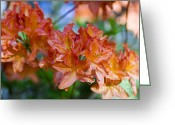 Asia Greeting Cards - Rhododendron flowers Greeting Card by Frank Tschakert
