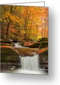 Leaves Photo Greeting Cards - River Rapid Greeting Card by Evgeni Dinev