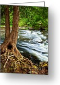 Boulder Greeting Cards - River through woods Greeting Card by Elena Elisseeva