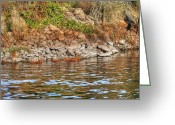 Fall Photographs Greeting Cards - River Water and Rocks Greeting Card by Ester  Rogers