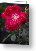 Inspriation Greeting Cards - R.L. Stanton Rose Garden Greeting Card by David A Dobbs