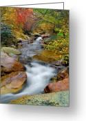 Creeks Greeting Cards - Rock Creek Greeting Card by Tim Reaves
