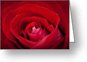 Alhaji Samura Greeting Cards - Rose Greeting Card by Alhaji Samura