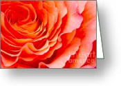 Flower Picture Greeting Cards - Rose Greeting Card by Angela Doelling AD DESIGN Photo and PhotoArt