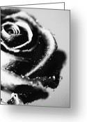 Flower Picture Greeting Cards - Rose Greeting Card by Falko Follert
