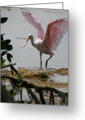 Roseate Spoonbill Greeting Cards - Roseate Wave Greeting Card by Kimberly Mohlenhoff