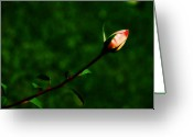 Lyle  Huisken Greeting Cards - Rosebud Greeting Card by Lyle  Huisken