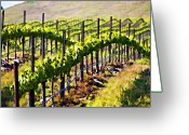 Vineyard Digital Art Greeting Cards - Rows Of Vines Greeting Card by Patricia Stalter