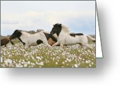 Four Animals Greeting Cards - Running Horses Greeting Card by Gigja Einarsdottir