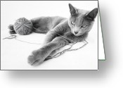 Whiskers Photo Greeting Cards - Russian Blue Greeting Card by Nailia Schwarz
