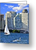 Canada Swan Greeting Cards - Sailing in Toronto harbor Greeting Card by Elena Elisseeva