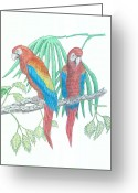 Large Bird Drawings Greeting Cards - Scarlet Macaw Greeting Card by Richard Freshour